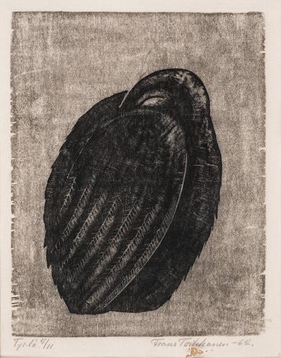 toikkanen-nukkuva-lintu